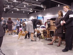 dog show bs getting ready.JPG